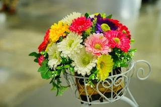 10 piante fiorite da coltivare in autunno