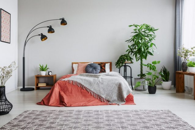 7 piante per la camera da letto che aiutano a dormire meglio ...