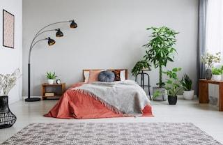 7 piante per la camera da letto che aiutano a dormire meglio e purificano l'aria