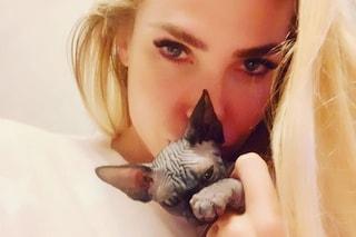 """Ilary Blasi presenta Donna Paola, il suo gatto è """"di lusso"""""""
