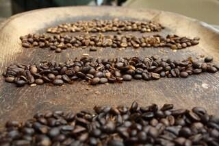 Dal caffè alla pasta: 5 alimenti a rischio a causa del cambiamento climatico