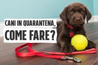 La quarantena dei nostri cani: i consigli dell'esperta su come affrontarla