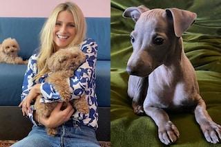 Michelle Hunziker presenta il suo nuovo cane, è un regalo speciale per Tomaso Trussardi