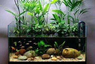 Come pulire i vetri dell'acquario da calcare e sporco velocemente