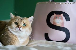 Rockstud Pet, arrivano le borse Valentino da personalizzare con il ritratto del tuo animale