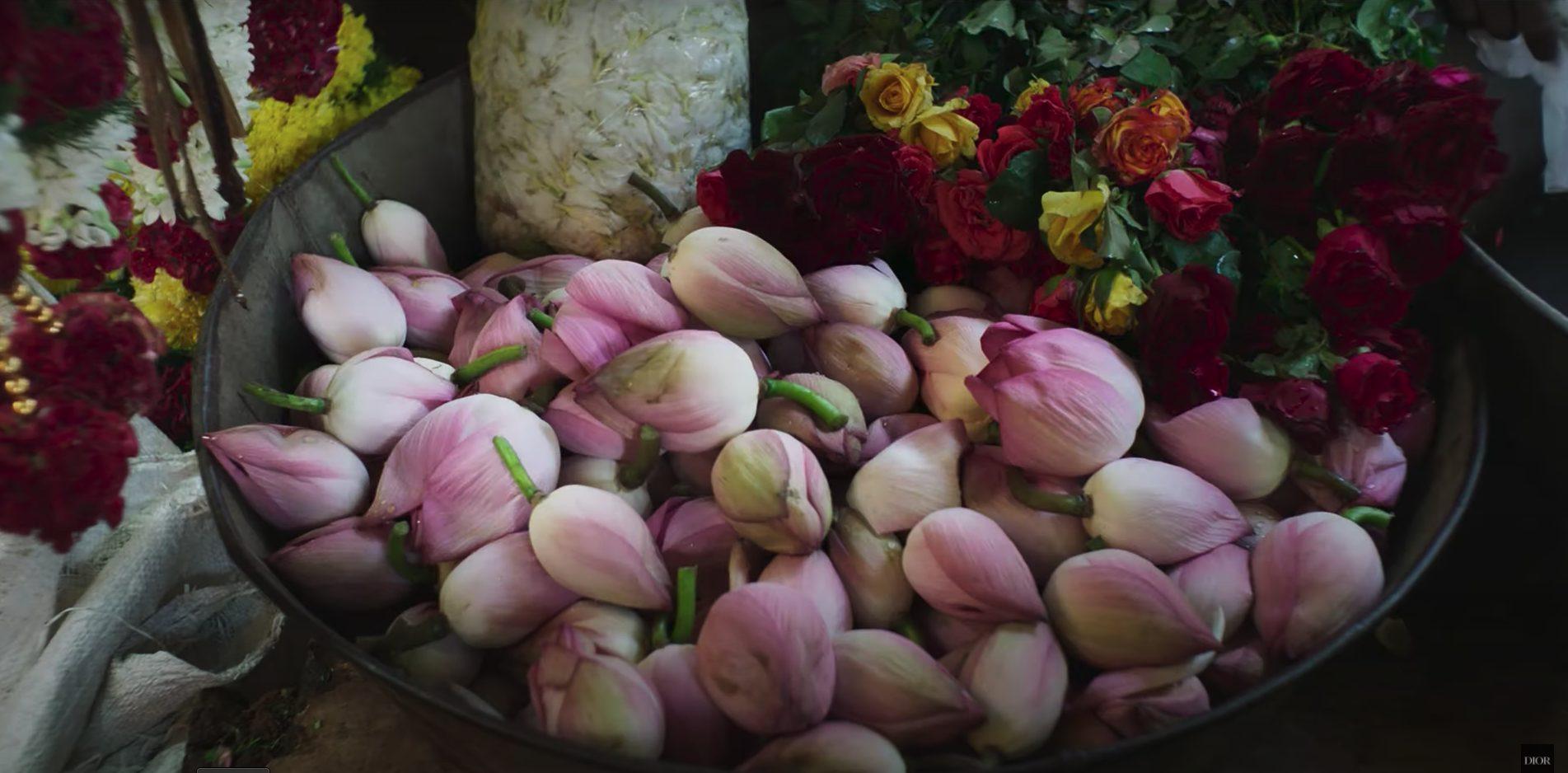 """La raccolta dei fiori, una scena tratta dal trailer del film """"Nose"""""""