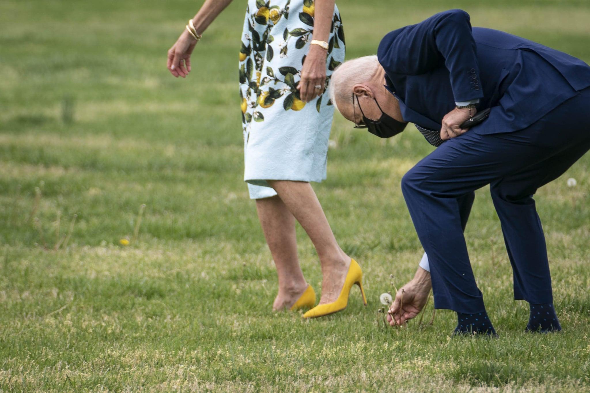 Joe Biden raccoglie un fiore per sua moglie