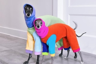 Arrivano i dog influencer, i cani con accessori firmati: ma è giusto esibirli sui social come bambole?
