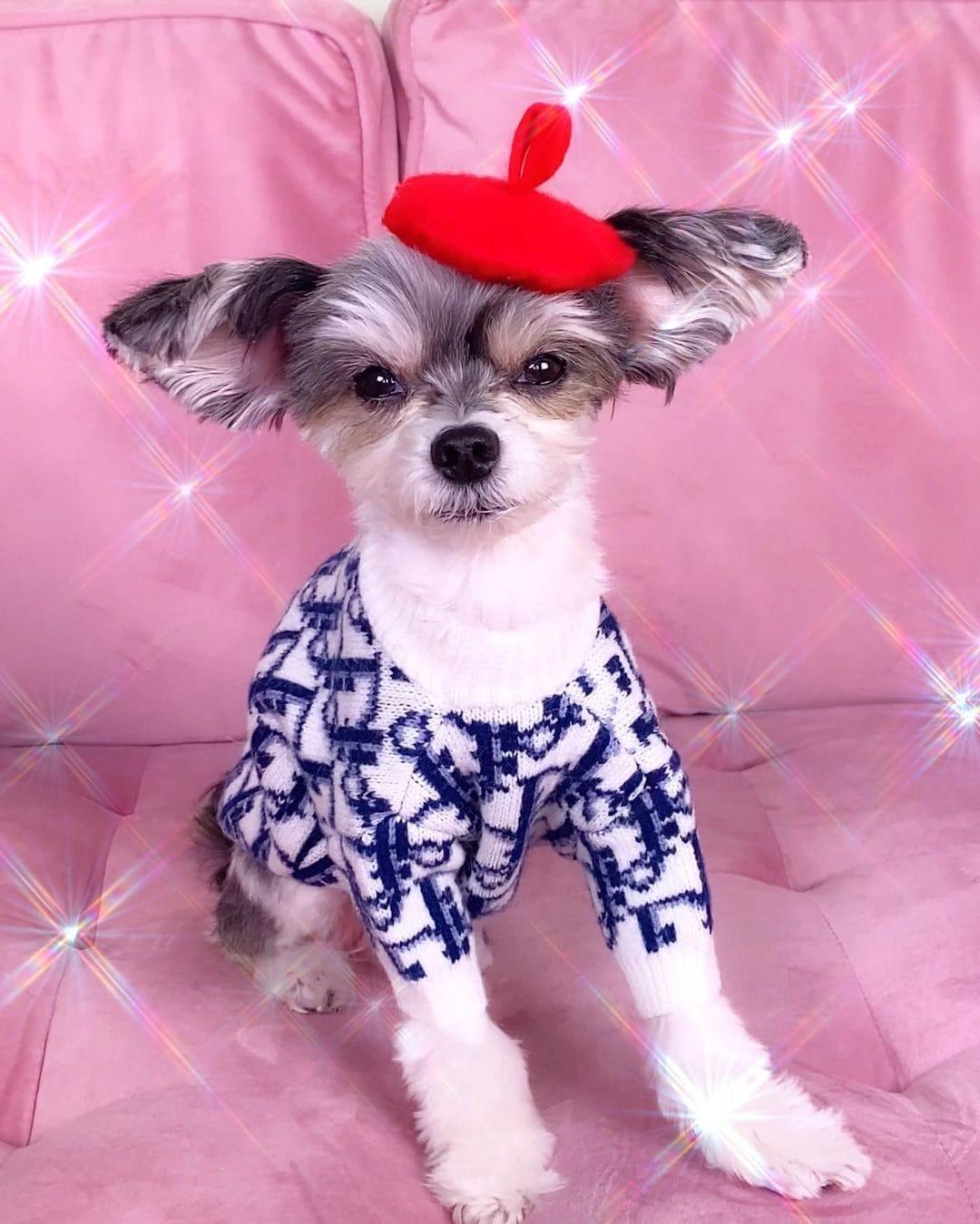 Tinkerbell in Dior su Instagram