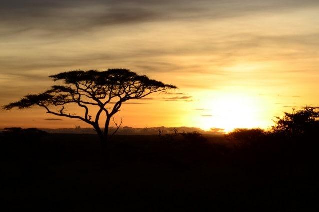 Alba sul Serengeti, Tanzania