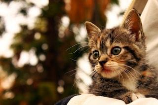 L'isola dei gatti: quando il colonizzatore ronfa
