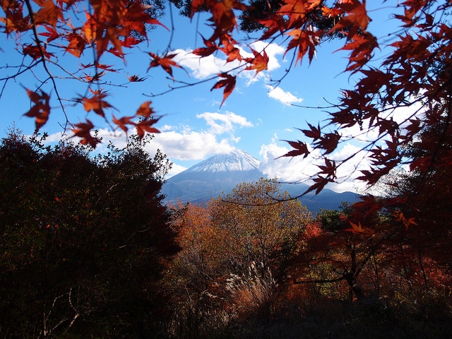 Il Monte Fuji da Aokigahara