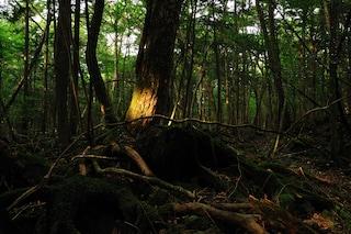 Un luogo da brivido: Aokigahara, la foresta dei suicidi in Giappone