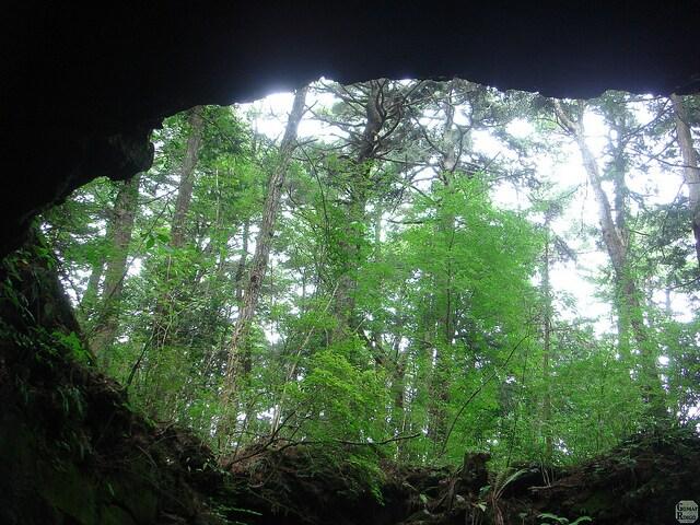 caverna all'interno della foresta di Aokigahara