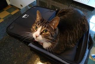 Dagli Stati Uniti arriva il Gps per seguire il cane ed il gatto in volo