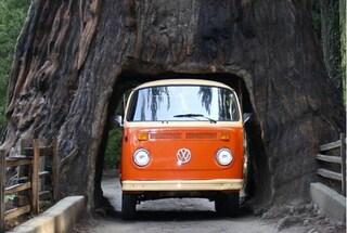Gli alberi giganti attraversati dalle auto: il Sequoia National Park