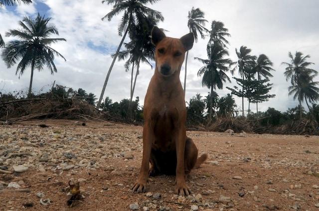 I cani devono essere registrati all'anagrafe canina