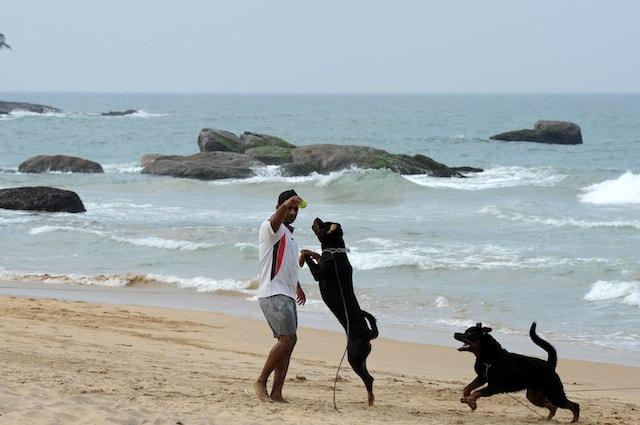Anche Fido può entrare in spiaggia