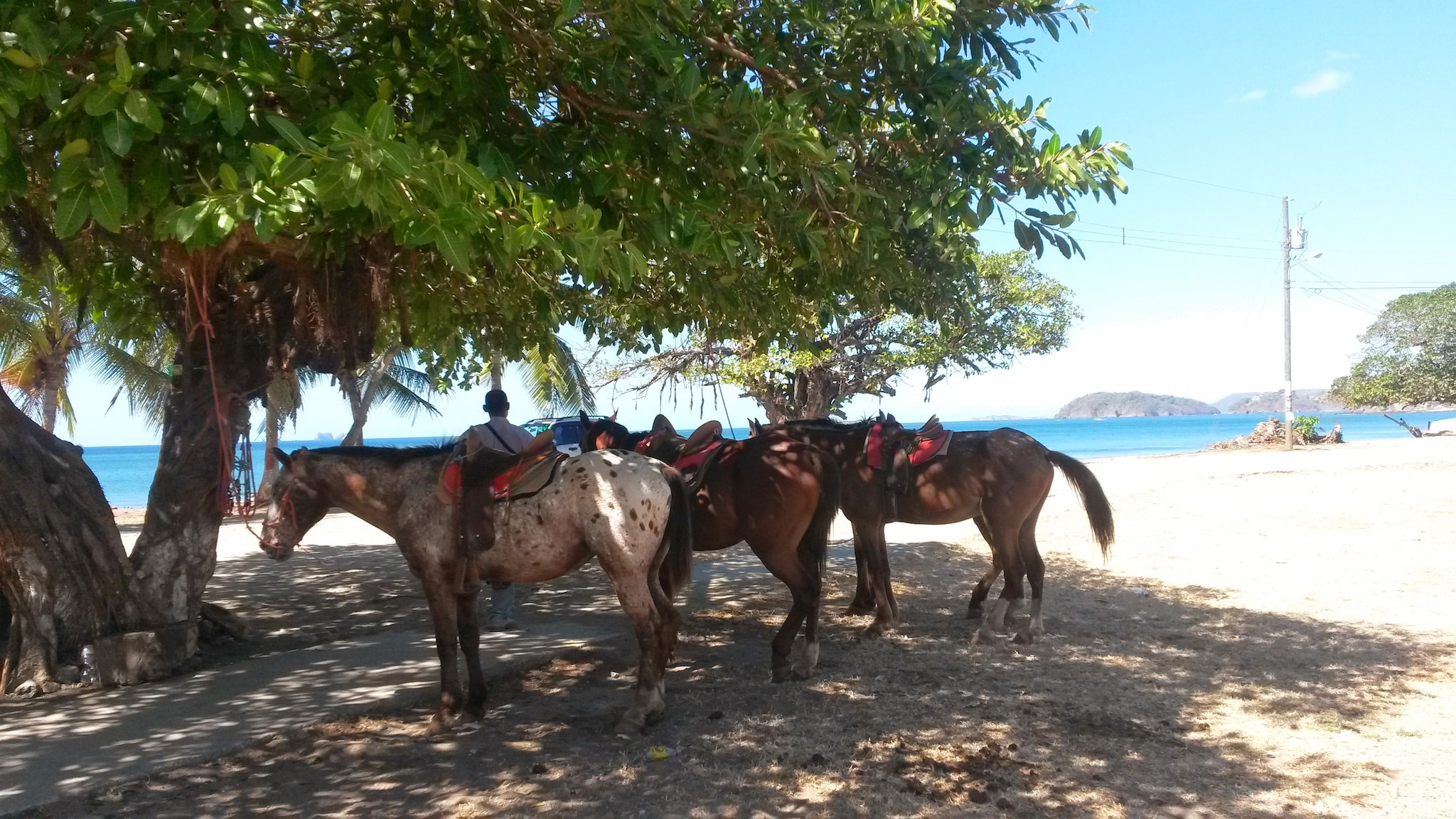 Verso la spiaggia a cavallo (Foto Fanpage.it/Raffaele Basile).
