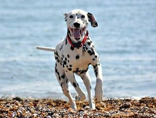 Dove il tuo cane ti porterebbe in vacanza