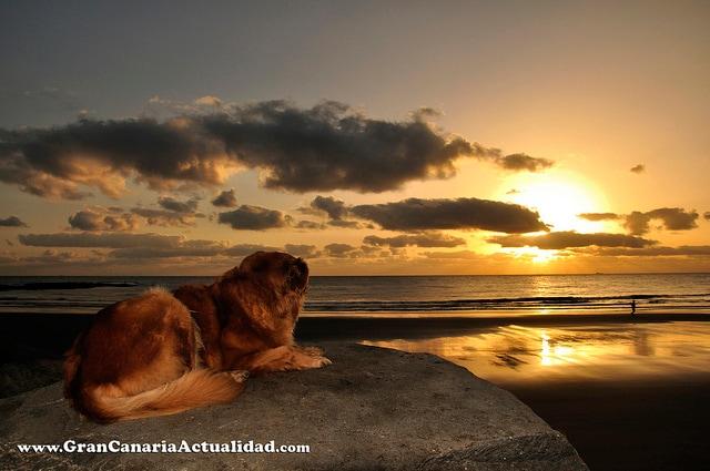 Il cane e il tramonte delle Canarie (Foto di Carlos Rodriguez).