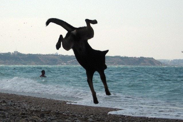La Sardegna è una regione Dog Friendly