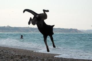 Spiagge per cani in Sardegna: una regione perfetta per Fido