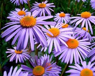 12-13 settembre: la magia delle piante al Perugia Flower Show