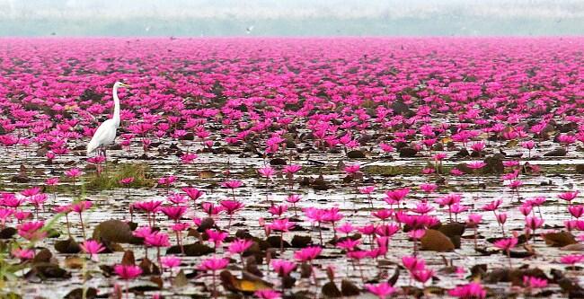Lago Nong Harn, Thailandia