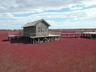 Cina, l'incantevole spettacolo della spiaggia rossa