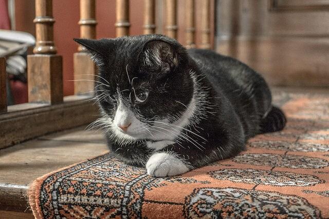 Museo dedicato ai gatti. Foto di shadowgate