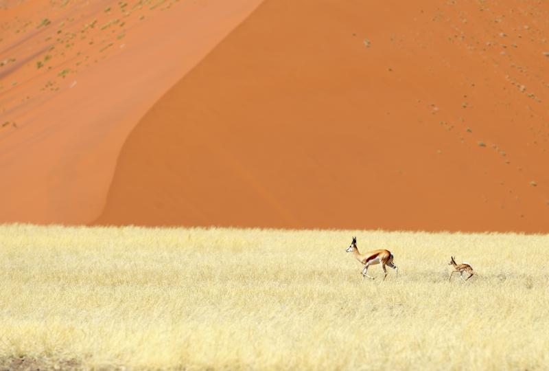 Parco Nazionale di Namib–Naukluft