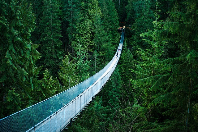 Capilano Suspension Bridge – Credits: Michelle Lee