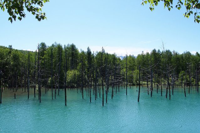 Blue Pond – Foto di きうこ