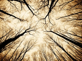 Hoia Baciu, la foresta dove vive il diavolo