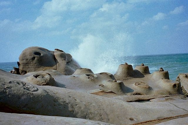 """Le """"candele di mare"""" – Foto Wikimedia Commons"""