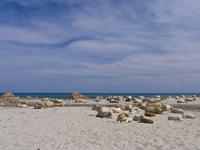 Spiaggia di Berchida. Foto di Aurelio Candido