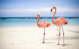 Una spiaggia paradisiaca dove fare il bagno con i fenicotteri rosa