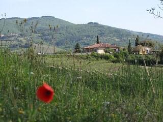 Radda in Chianti, una gemma nel verde della Toscana