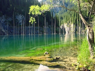 "L'incredibile foresta ""sottosopra"" del lago Kaindy"