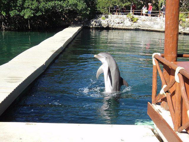 Un delfino saluta i visitatori nella Riviera Maya – Foto di Andrew@Buenos Aires