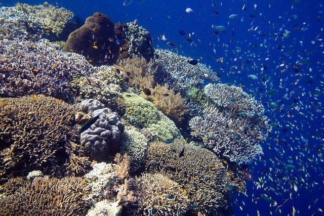 Barriera coraalina di Bali