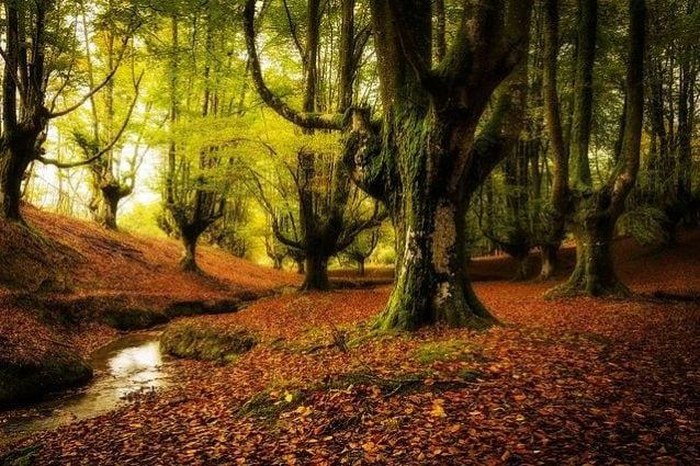 Foresta di Otzarreta, Spagna – Foto Wikipedia
