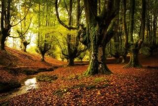 Le 15 foreste più belle del mondo