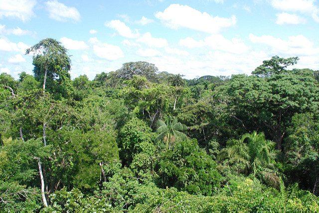 Foresta Amazzonica – Foto di Ivan Mlinaric