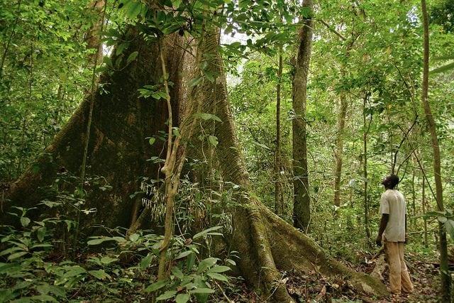 Foresta tropicale in Gabon – Foto di Axel Rouvin