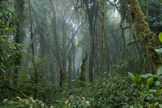 Monteverde Cloud Forest, Costa Rica – Foto travelmag.com