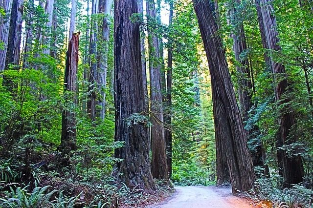 Redwood National Park – Foto Pixabay