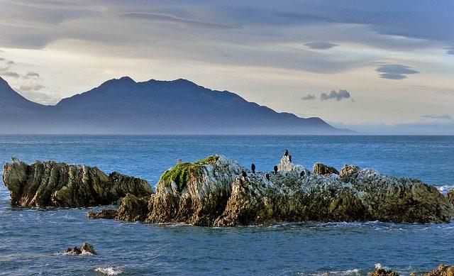 A Kaukoura è possibile ammirare le foche da vicino