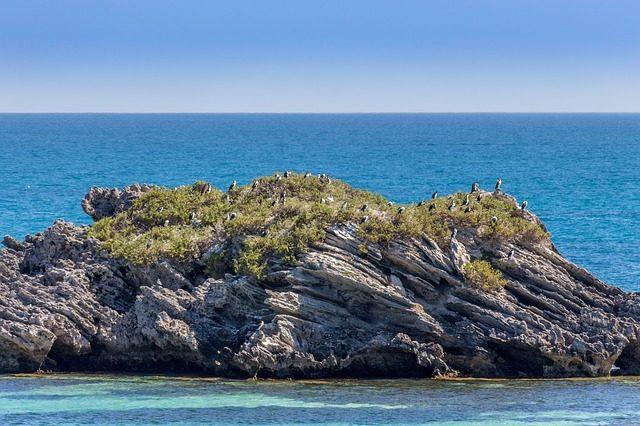 Colonia di uccelli a Rottnest Island – Foto Pixabay